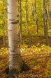 GOLDEN LIGHT OF AUTUMN  -  1449.jpg