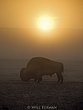 WHERE THE BUFFALO ROAM    -  1255 -  Sunrise in Yellowstone National Park-71.jpg