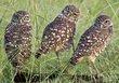 Owls 16.jpg