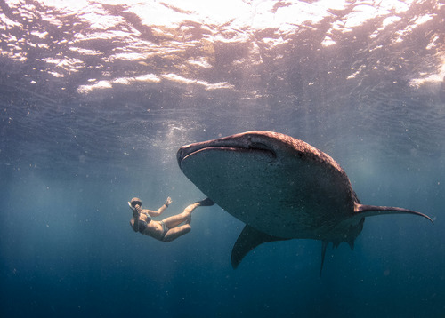 Whale Shark (1 of 1)-27.jpg