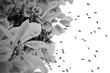 Honeybees (3).jpg
