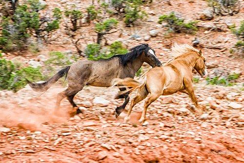 Wild Horse-1001.jpg