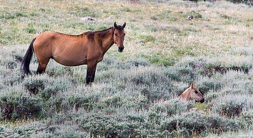Wild Horse-1004.jpg