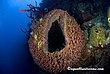 Belizetripreportthumb.jpg