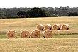 Hay in Hayes County.jpg