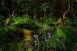 In the Weeds.jpg