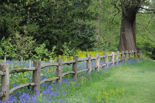 Bluebells Kew Gardens.jpg