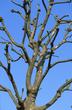 Barons Court Tree  13A 844.jpg