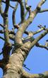Barons Court Tree 13A 802.jpg