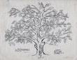 01 Flower American Family Tree 286_1.jpg