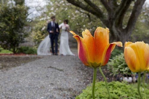Tulips-in-bloom-Ballmac-House-Hotel.jpg