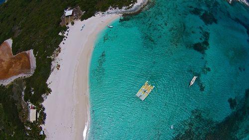 Prickly Pear-2 (Anguilla).jpg