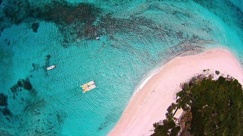 Prickly Pear-4 (Anguilla).jpg