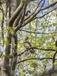 050818WILD-WoodDuckPair-StCharles-MN.jpg