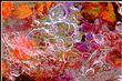 ICE_0668_v2_72.jpg