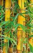 Bamboo tree stalks.jpg