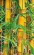 Bamboo tree stalks.jpg