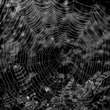 Dew Drop in said the Spider-0407.jpg