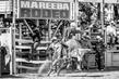 Mareeba2019-9660-2.jpg