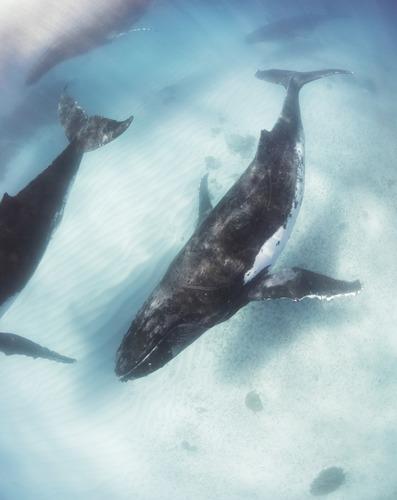 Image 17 - Pastel Whales.jpg