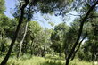A wood outside Athens.jpg
