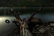 BW Sunrise Farragut State Park Lake Pend Oreille-9335.jpg