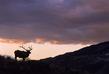 Elk_Sunset.jpg
