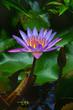Iridescent Lily.jpg