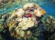 life on the reef.jpg