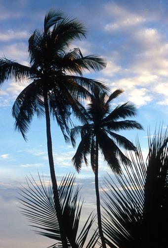 Blue Sky Silhouette.jpg