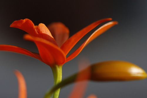 Yoga Bloom.jpg