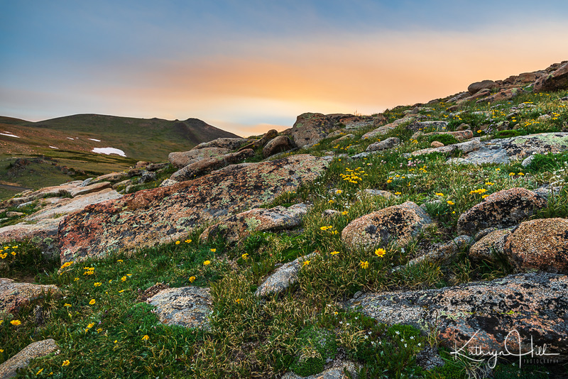 Celebrating Summer.jpg :: Old Man of the Mountain celebrates a summertime morning on the tundra, Rocky Mountain National Park, Colorado, USA.
