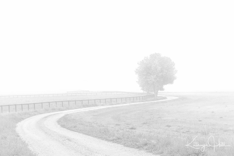 Guardian of the Pasture.jpg :: A lone tree guards the foggy pasture along this winding road in northern Colorado