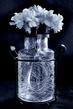 Carnations in Vase.jpg