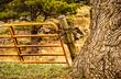 Gate Fence Cottonwood.jpg