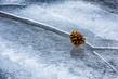 Pine Cone on Cracked Ice.jpg