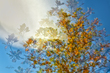 Shumard Autumn Abstract.jpg