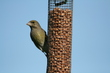 Birds 057-8da4a.jpg