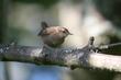 Birds1 011-c9644.jpg