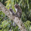 Baby Macaques.jpg