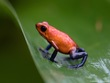 Blue Jean Frog.jpg