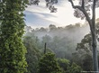 Danum Valley Morning Mist.jpg