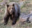 Grizzly Bear-590-d.jpg