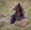 Grizzly Bear-994-d.jpg