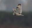 Owls Nov20-461-d.jpg