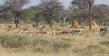 Wildlife and Termites.jpg