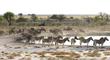Zebra Waterhole.jpg