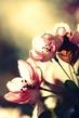retro apple blossom.jpg