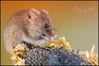 mouse1 (2).jpg