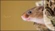 mouse2 (2).jpg